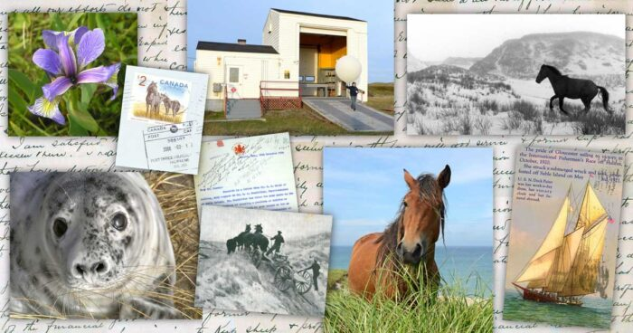 A collage of photos showing horses, a seal, a blue iris flower, a weather balloon, and copies of old letters and a post card showing the famous fishing schooner Esperanto.