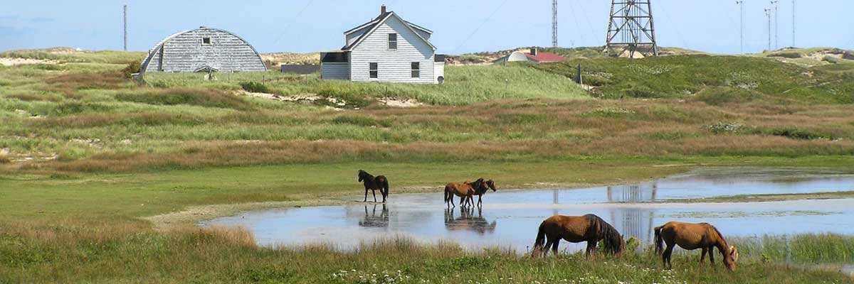 A sunny day, with a white-shingled house on a low, grassy hill overlooking a pond with horses standing in and at the edge of the water.